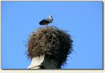 Gorzanów - bocian na dachu