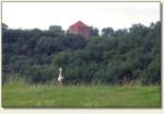 Rogóźno-Zamek - wieża i bocian